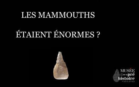 Idée reçue : Les mammouths étaient énormes