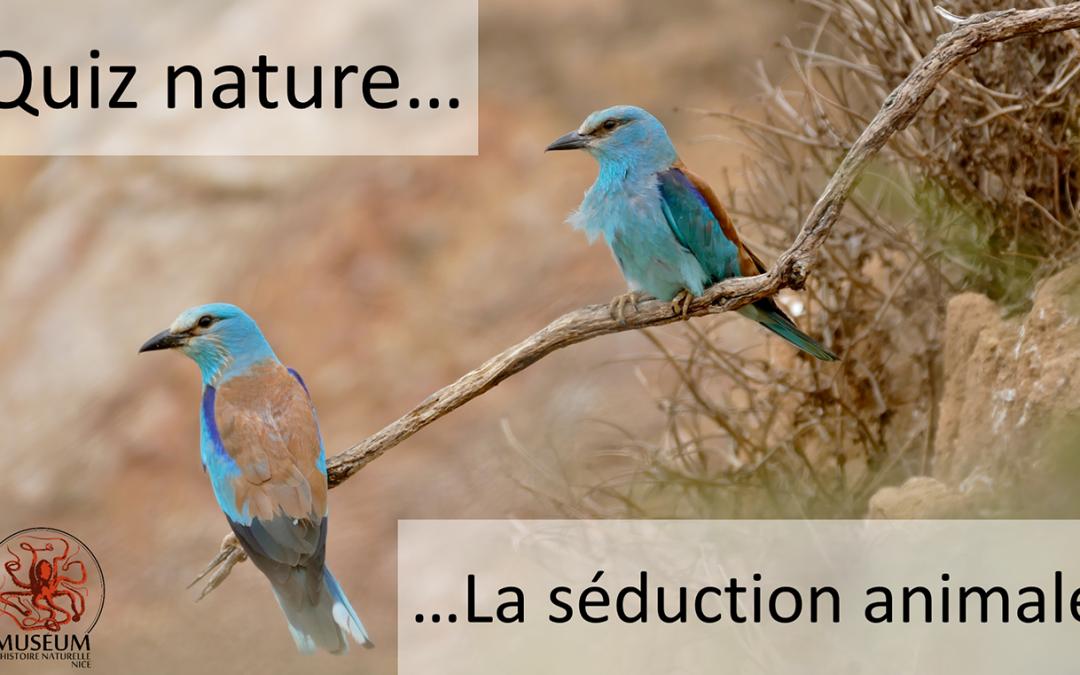 Quiz Nature– La séduction animale