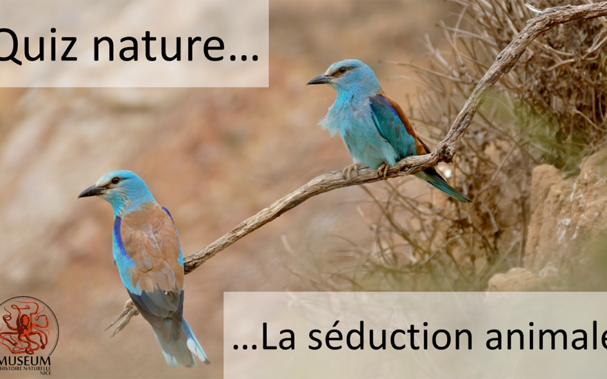 Quiz Nature – La séduction animale