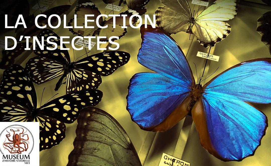Reportage: La collection d'insectes du Museum d'Histoire Naturelle