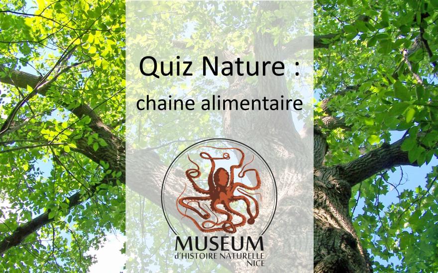 Quiz Nature: chaine alimentaire