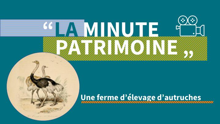 La minute patrimoine: Une ferme d'élevage d'autruches